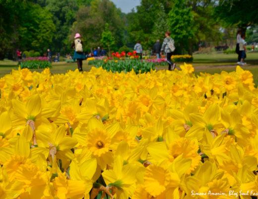 #sigurtà #verona #veneto #gardens #flowers #italy