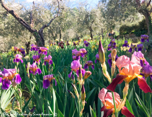 #iris #giardinodelliris #firenze