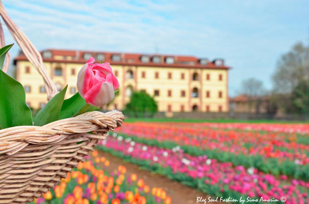 #tulipaniitaliani #tulips